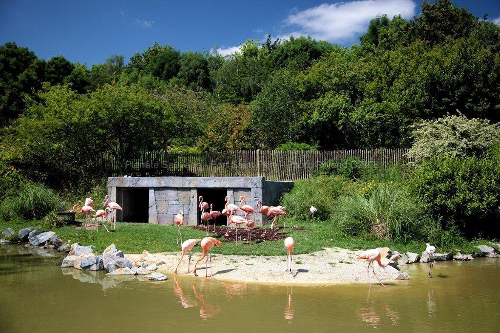 parc zoo près du camping