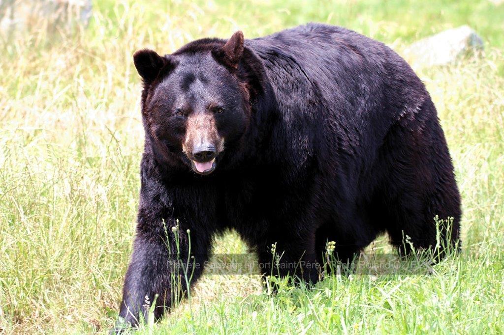 ours de planete sauvage