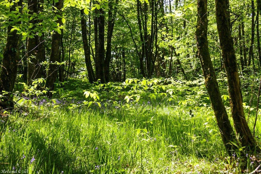 Camping calme et nature en vendée